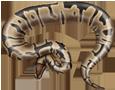Royal Python ##STADE## - scale 5