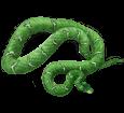 Boa constrictor ##STADE## - scale 5