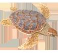 Loggerhead Sea Turtle ##STADE## - scale 26